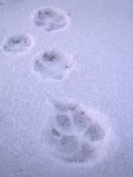 Vorwärts im Schnee
