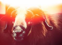 The Illumination of the Ram by the Coward M. Doesnotcare