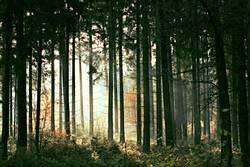 lichter Wald I