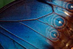 blau wie flügel