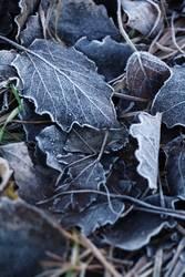Ein Hauch vom Frost