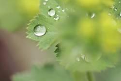 Gartentropfen