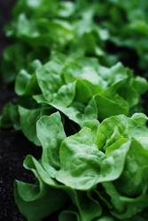 Salat ohne Dressing