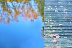 Herbst am blauen See