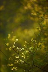 Frühlingslaub