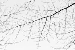 Zweigstrukturen