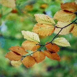 Herbst im Quadrat