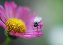 Blumenwächter