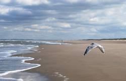 Frei ist der Vogel im Wind
