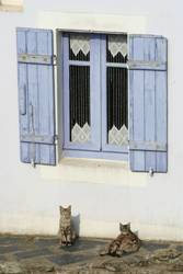 Katzen Siesta