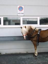 Pferde parken verboten!