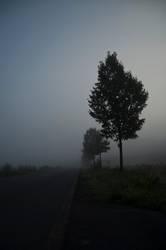 Verschwinden im Nebel - Der Morgen danch ...