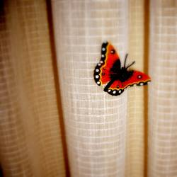 J'ai des butterfly...