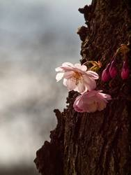 even old wood creates spring fever