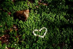 Forest Love