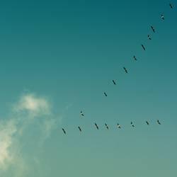 vogelzug die erste