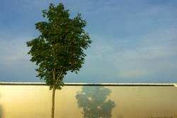 Wenn Bäume mit LKW`s kuscheln...