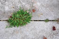 Es grünt so grün auch Beton kann blühn