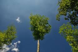 Bäume die in den Himmel wachsen