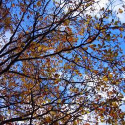 Mein geliebter Herbst