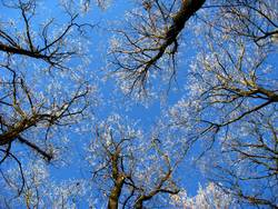 Frostkronen
