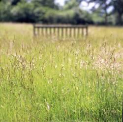 Barfuß durchs Gras.