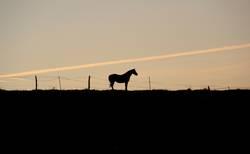 einsames pferd