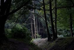 im Wald da…