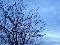 Bluetree