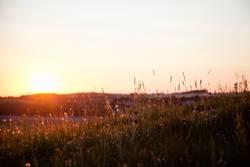 Sommer Sonne Wiese