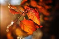 Leuchtende Blätter mit Bokeh