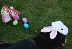 dog joining the fun at easter
