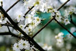 Blütenzaun