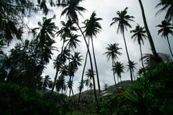 Seychellen Palmenblick