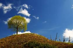 Frühlingsbaum bei mir um die Ecke
