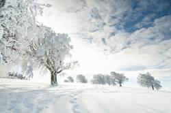 für alle Winterhasser