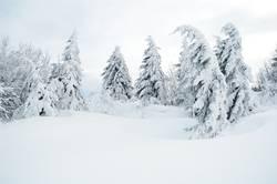 winterbäume - winterträume