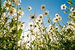 neulich in der Blumenwiese