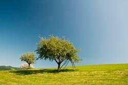 Obstbaum und viel blauer Himmel