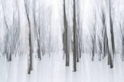 bewegter Winterwald