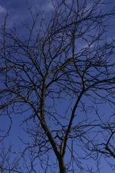 Kalter Ast vor blauem Himmel