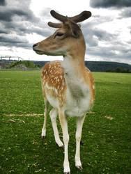 Disney's Bambi