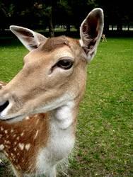 Disney's Bambi II