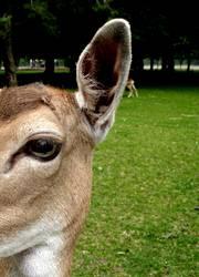 Disney's Bambi III
