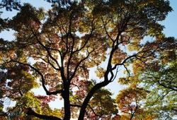 Kanadischer Herbst III