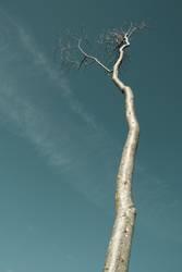 tree of fall (1)