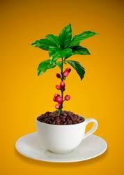 Kaffeetasse mit Kaffeebohnen und Kaffeepflanze