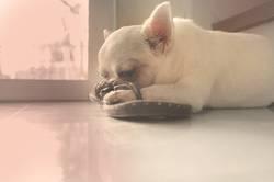 Dog sleeping on the floor , cute dog