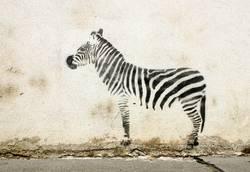 street-graffiti-zebra