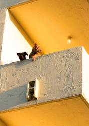Hunde Ghetto Siedlung